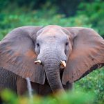 Researchers at the University of Stirling have led an international study to investigate how climate change has impacted Central Africa's rainforests, as well as the unique elephants that dwell in them.