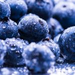 The researchers discovered that plant droplets on the edges of blueberry bush leaves are loaded with nutrients for visitors such as bees, wasps, and flies.