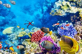 In a new study led by John Pandolfi and Dr Timothy Staples of the ARC Centre of Excellence for Coral Reef Studies, scientists looked at how the assemblages of plankton species have changed over the past 66 million years across the world's marine ecosystems.
