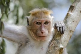 According to an international team of researchers, the remains most likely belong to ancestors of monkeys that exist in the same region today.