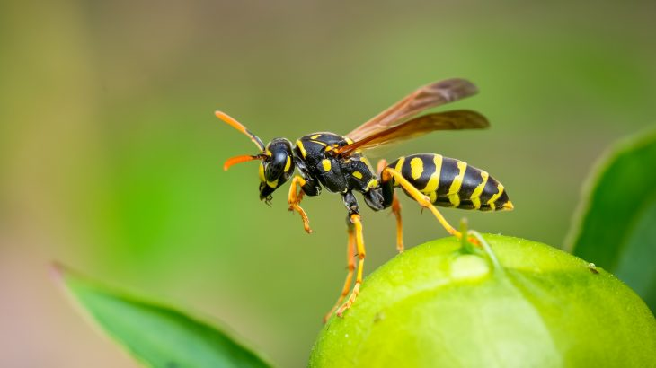The research is focused on the potential for proteins found in wasp venom to be converted into bacteria-killing molecules
