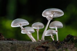fungi characteristics and function