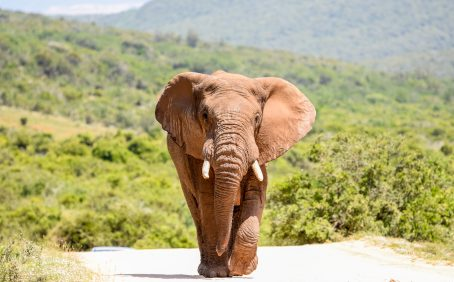 """In a new study published by PLOS, experts have investigated the distribution and conservation status of forest elephants in the tropical West African country of Côte d'Ivoire, which translates in English to the """"Ivory Coast."""""""