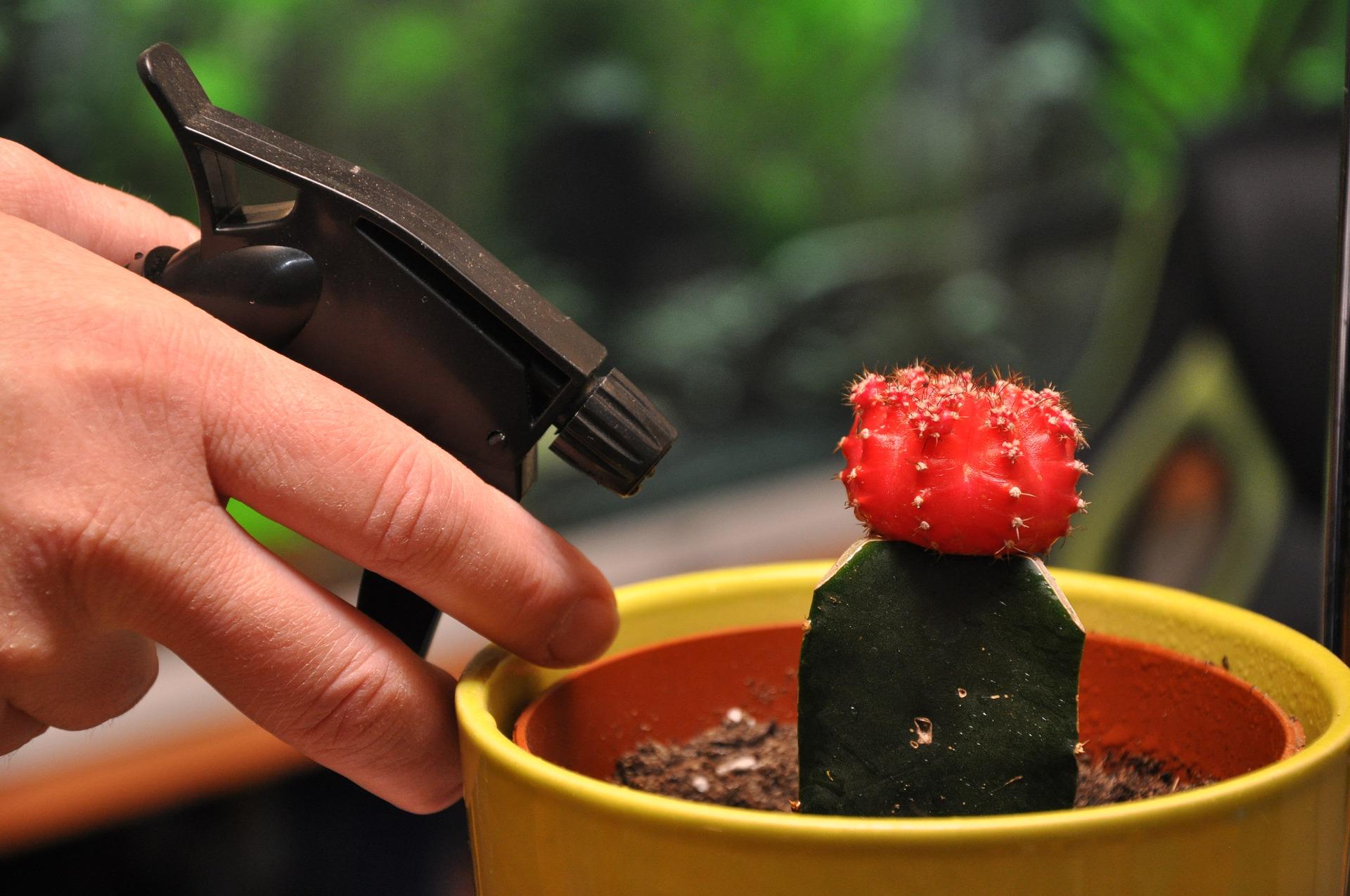 neem oil use