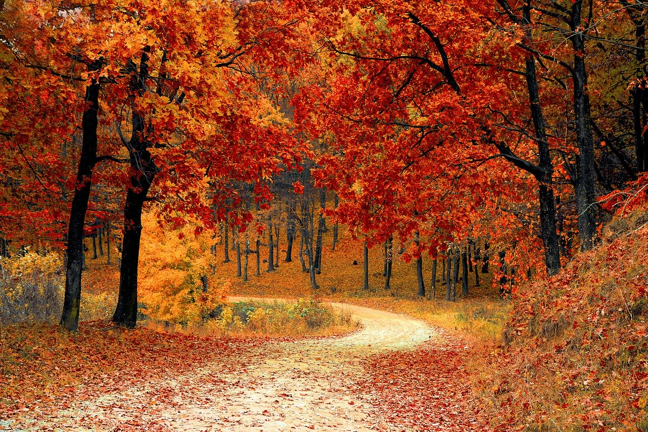 temperate deciduous forest plants autumn fall