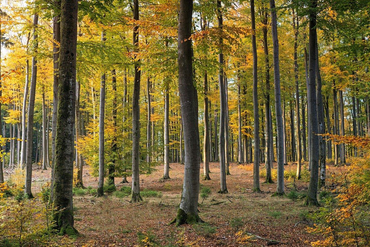 temperate deciduous trees
