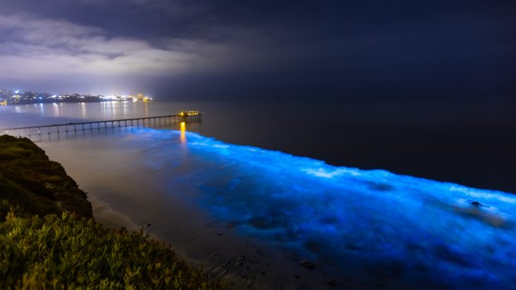 Scientists have discovered a bioluminescent gene that may give sea pickles, or pyrosomes, the ability to emit blue-green light
