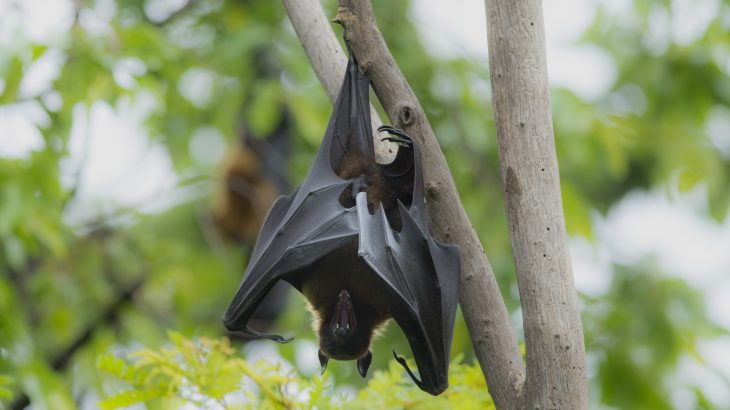Vampire bats socially distance themselves when they are sick, according to a study published by Oxford University Press.