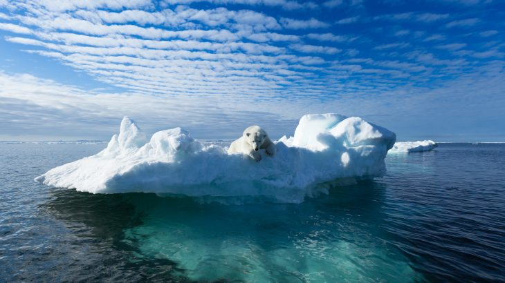 In a reinforcing feedback loop, the loss of huge masses of sea ice accelerates global warming, which causes sea ice to retreat even further.