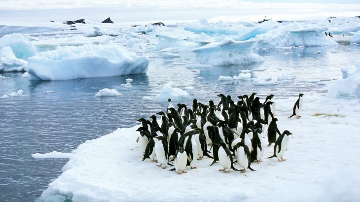 Experts at Stanford University have designed a multi-drone imaging system that uses a unique route planning algorithm to autonomously survey penguin colonies