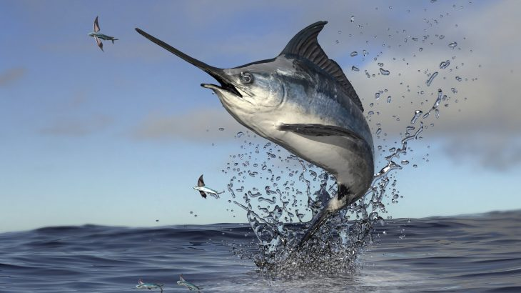 scientists report that by leaving more big fish in the ocean, the amount of carbon dioxide (CO2) released into the Earth's atmosphere can be reduced.
