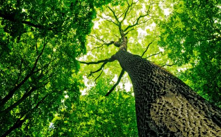 The analysis of forests in the Pacific Northwest has revealed that despite making up only three percent of the total number of trees across the study sites, large-diameter trees store 42 percent of the total above-ground carbon in these ecosystems.