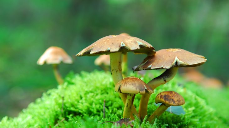 Experts at Johns Hopkins Medicine found that two doses of psilocybin combined with supportive psychotherapy provided rapid and extensive relief for patients suffering from major depression.