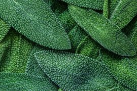 Experts at Emory University have conducted the first comprehensive review of natural plant compounds that have antibacterial properties.