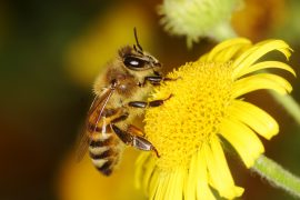 Researchers have created the first map of global bee diversity, according to a new study published by Cell Press.