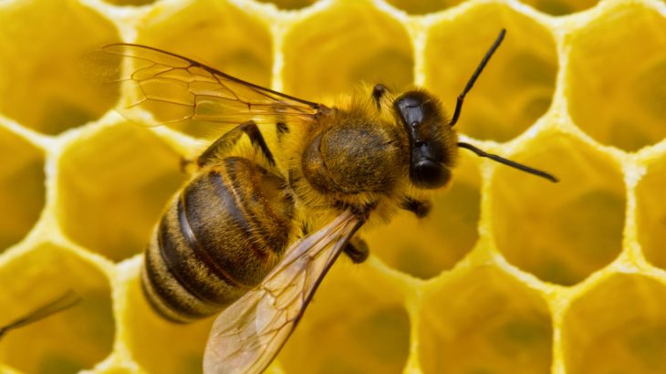 Common pesticides that are believed to threaten the health and survival of honeybees can now be detected in honey, according to researchers at the University of Waterloo.