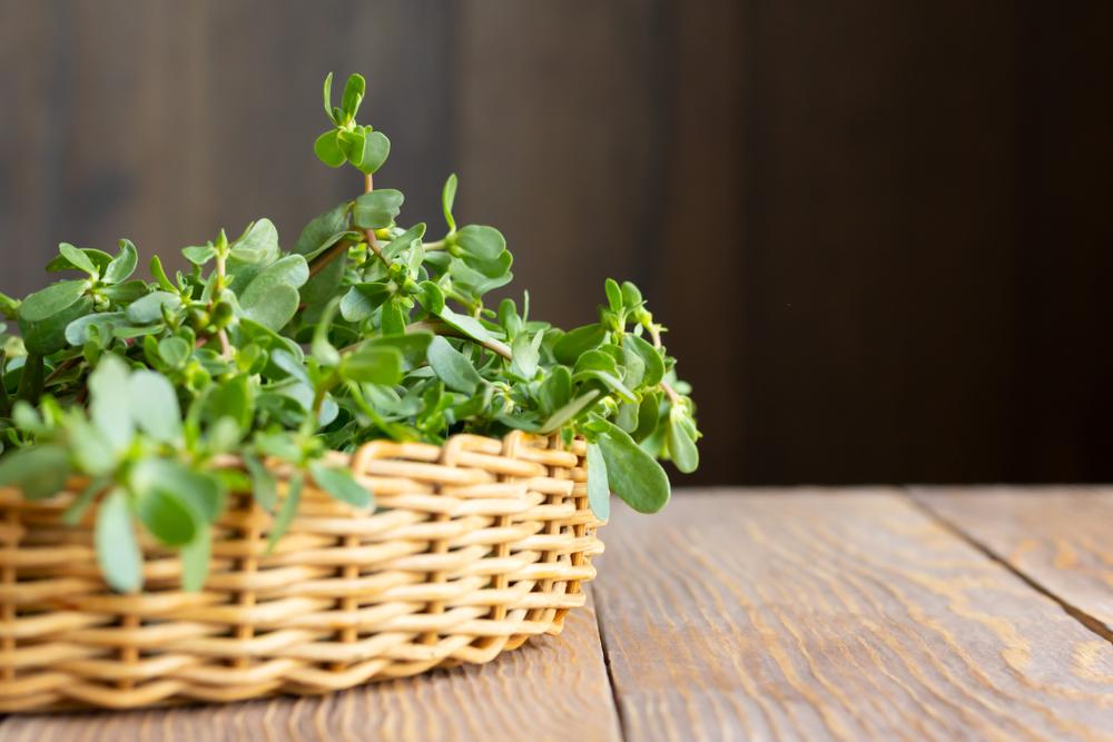 purslane herb