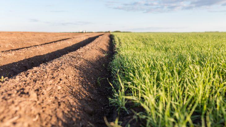 arable land importance