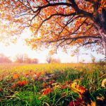 In recent decades, global warming has caused temperate trees to cling onto their leaves later and later in the year.