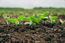 In a study from the University of Washington, scientists have successfully introduced microbes into soil to make phosphorus more available to the roots of agricultural crops