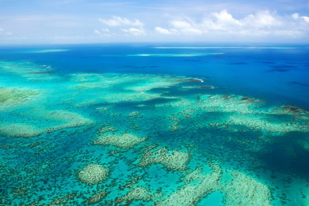 Today's Video of the Day from the ARC Centre of Excellence for Coral Reef Studies describes the genomic analysis used by scientists to investigate how corals on the Great Barrier Reef have survived challenges