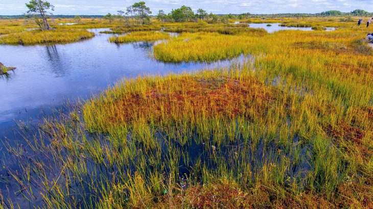 A new study led by the University of Exeter confirms that preserving peatlands, along with the carbon they hold, is critically needed to limit climate change