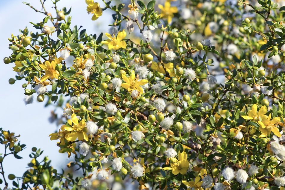 Researchers at UT Austin have used computer algorithms to conduct the first-ever survey of creosote bushes in the Mojave Desert.