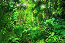 A new study from the University of Leeds has produced the first clear evidence that the lifespan of tropical trees will be limited by global warming.