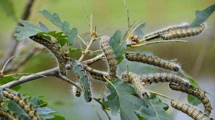 In a breakthrough study, experts at the University of Delaware have identified the powerhouse plants that are most critically needed to support food webs across the United States
