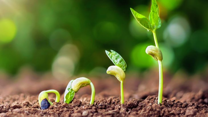 Plants including maize, beans, and Arabidopsis prefer nitrogen in the form of nitrate, and grow better on soil that is rich in nitrate