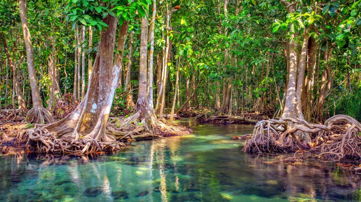 About 6,000 years ago, most of the mangrove forests on the coast of Oman mysteriously vanished.
