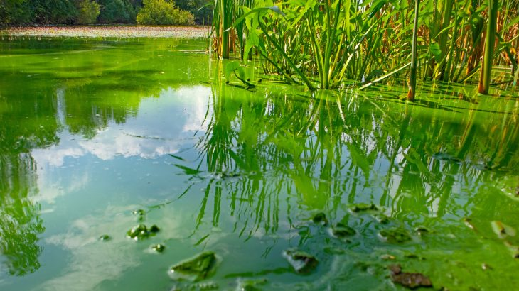 Scientists at CU Boulder have discovered that cyanobacteria, also known as blue-green algae, may have a lot in common with organisms that fundamentally transformed the planet billions of years ago.