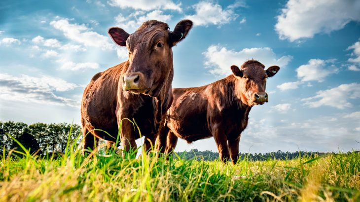 According to a new study from the American Society of Agronomy, harvested fields that are covered with corn residue in the late fall may seem useless, but these husks, kernels, and cobs are actually a valuable resource for cattle grazing.