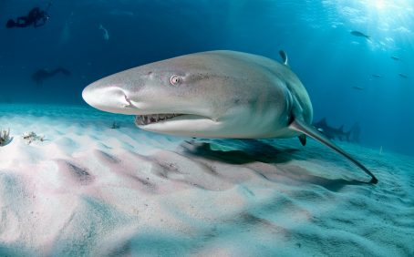The researchers found that as a result of global warming, baby sharks are born smaller, exhausted, and undernourished.
