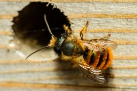 In a new study from Penn State, researchers have found that climate change reduces the abundance and diversity of wild bees