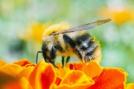 The research shows that bees and flies exposed to neonicotinoid insecticides, which are commonly used worldwide, are struggling with their sleep and memory.