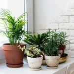 The researchers found that exposure to houseplants had a positive influence on mental health during the early months of the COVID-19 lockdown.