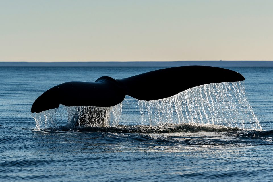 In a new report from NOAA Fisheries, experts have evaluated the effectiveness of regulations that were issued in 2008 to protect endangered North Atlantic right whales from deadly ship strikes.