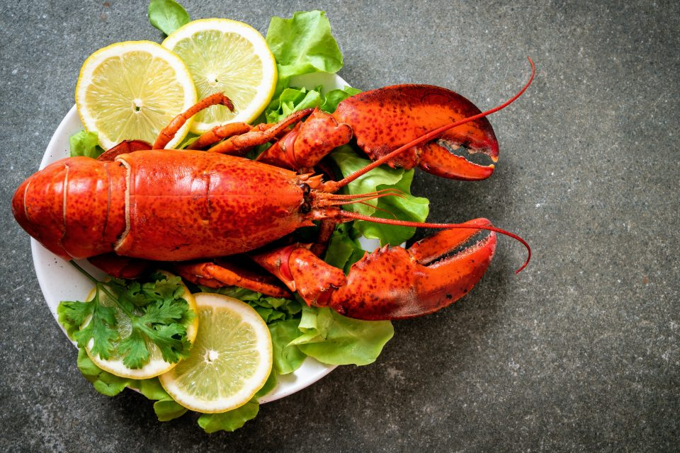 American lobsters are more susceptible to changing ocean conditions than what was previously realized