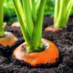 A new study from the American Society of Agronomy has investigated sources of food contamination in the soil
