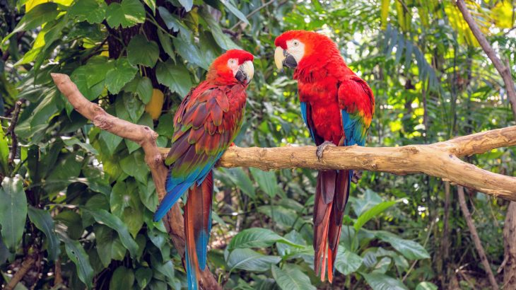 Understanding how birds species live in their natural habitats can help inform zoos on how to protect birds in captivity, according to research conducted by Dr. Paul Rose of the University of Exeter.