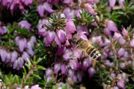 In a new study from the University of Sussex, experts have uncovered new details about the relationship between plant and bee diversity.