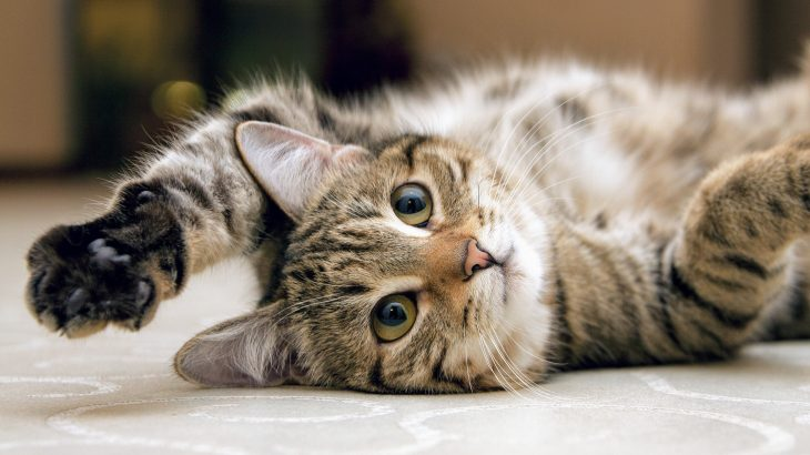 The experts also discovered that cats will hunt for wildlife less when their owners play with them on a daily basis.