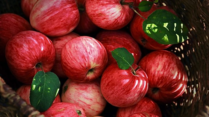 Natural compounds found in apples can improve brain function, according to a new study from the International Society for Stem Cell Research.