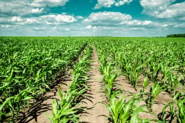 Researchers at the University of Massachusetts Amherst have used remote sensing to investigate farmland erosion in the Corn Belt region of the Midwestern United States