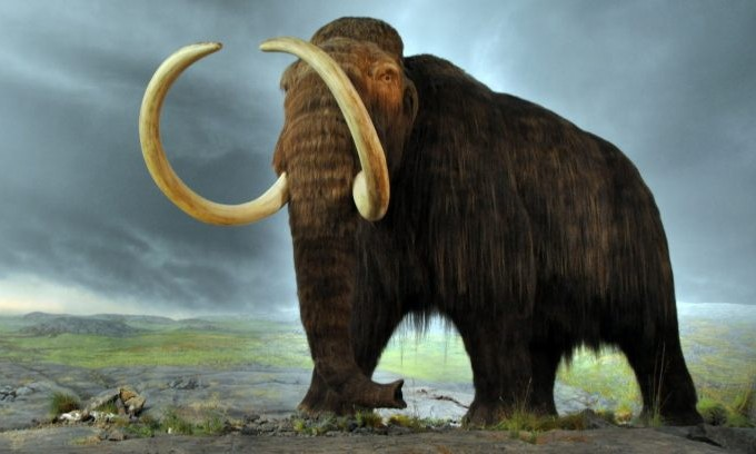 Around 10,000 years ago, the largest mammals in North America completely vanished.