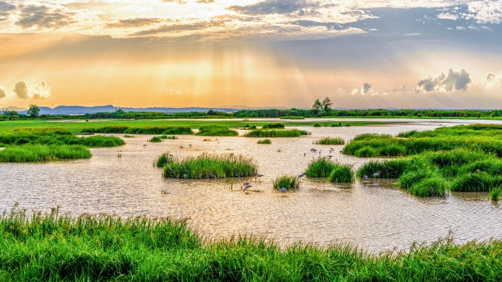 A team of researchers in the UK and India investigated the role of ecosystems in sanitation, and found that nature provides at least 18 percent of these services in 48 major cities.