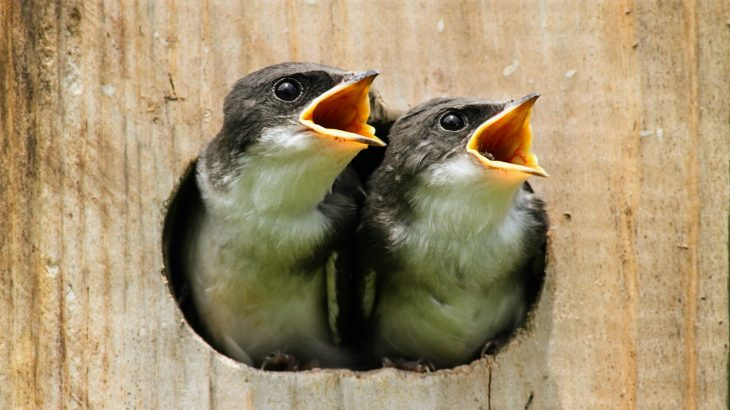 Noise from natural gas pipeline compressors does not deter birds from establishing nests nearby, but ultimately interferes with their reproductive success