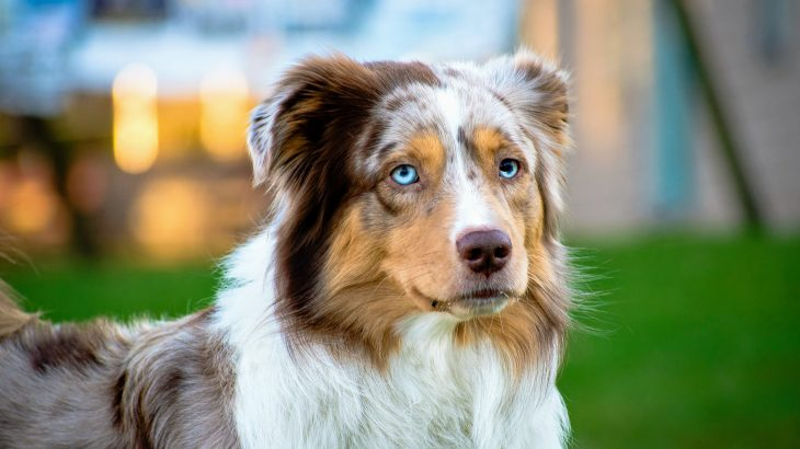 In a breakthrough study from Eötvös Loránd University, experts have found that dogs show signs of self-awareness by demonstrating the ability to distinguish their body from its surrounding environment.