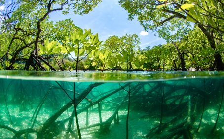 Mangrove forests have a greater capacity to store carbon when they are diverse, according to a new study published by the British Ecological Society.